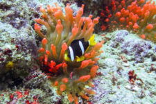 Malaysian group · Dive in Weh Island · Monster Divers