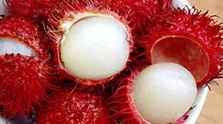 Rambutan · How to taste in Weh Island · Aceh · Sumatra · Indonesia